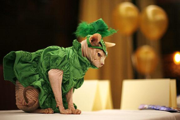 Gatos a la moda 2